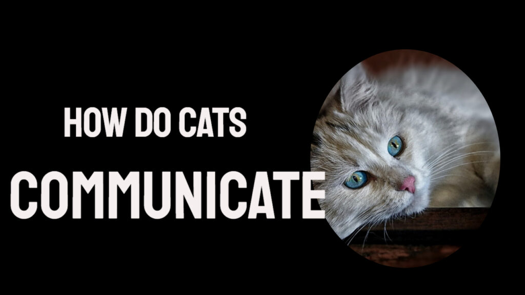 how do cats communicate