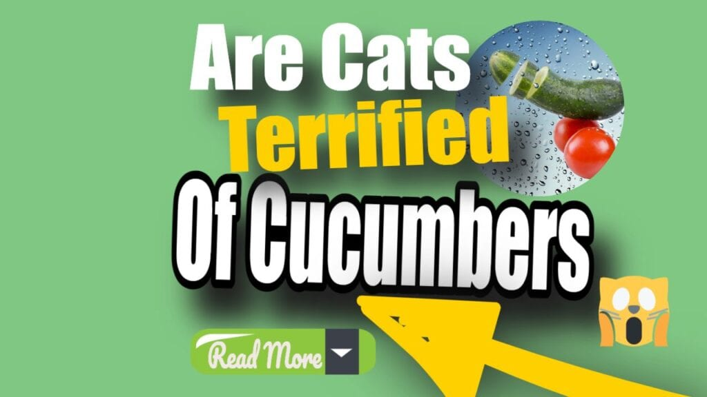 are cats terrified of cucumbers. read more