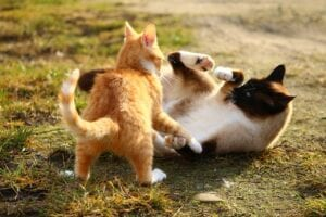 two cats in a play fight