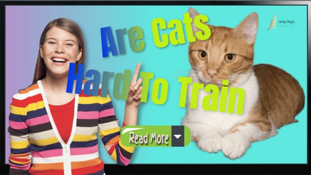 Are Cats hard To train read more