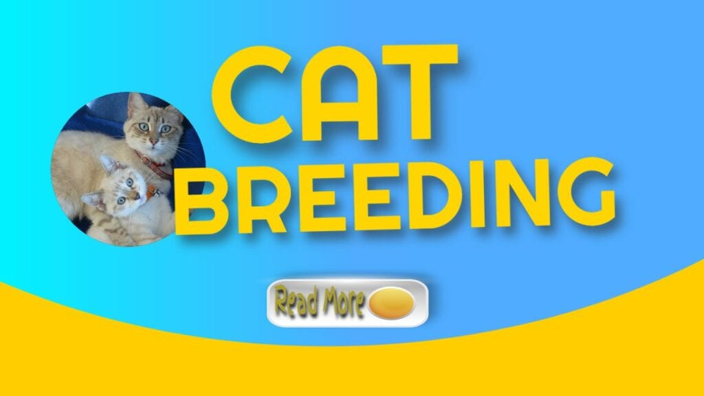 cat breeding