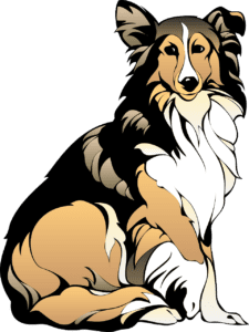 collie dog image
