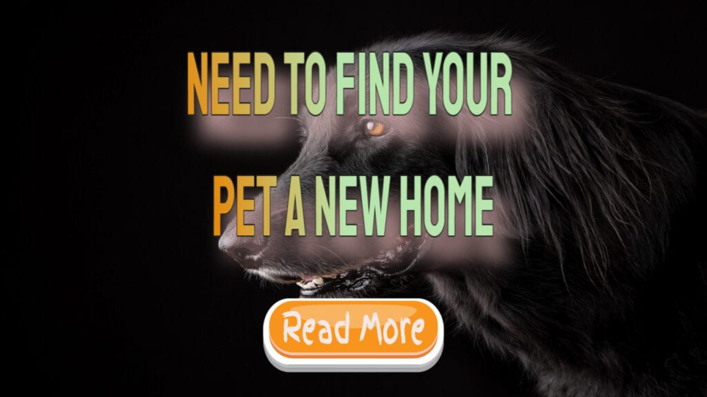 need to find your pet a new home