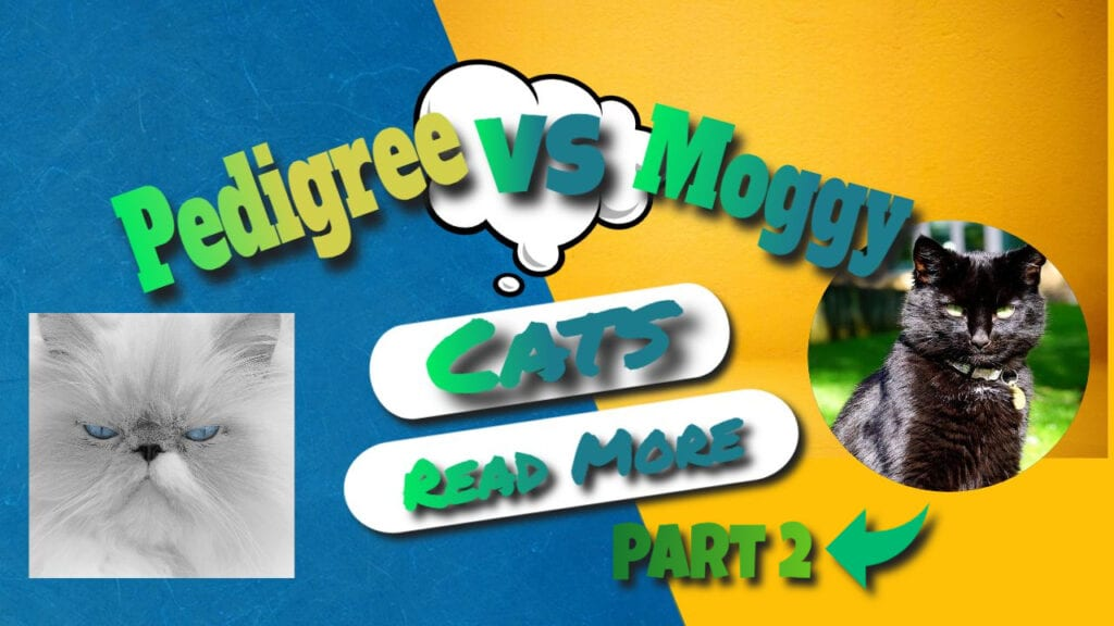 pedigree VS moggy part 2