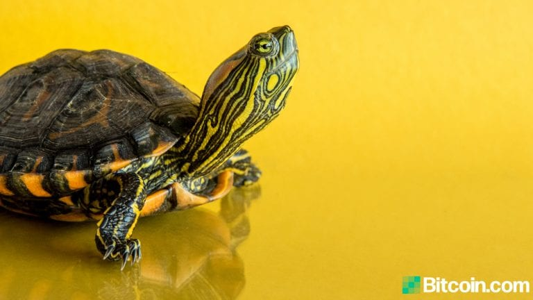 Another Binance Smart Chain Project Turtledex Rug Pulls With Tokens Worth $2.5M Confirmed Stolen